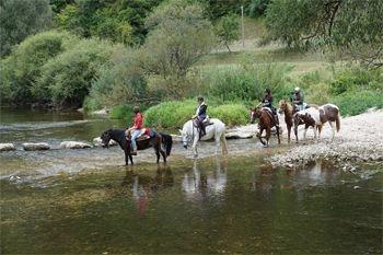 Petit Bourg – Une randonnée à cheval de 2 heures, expérience unique à partager en pleine nature